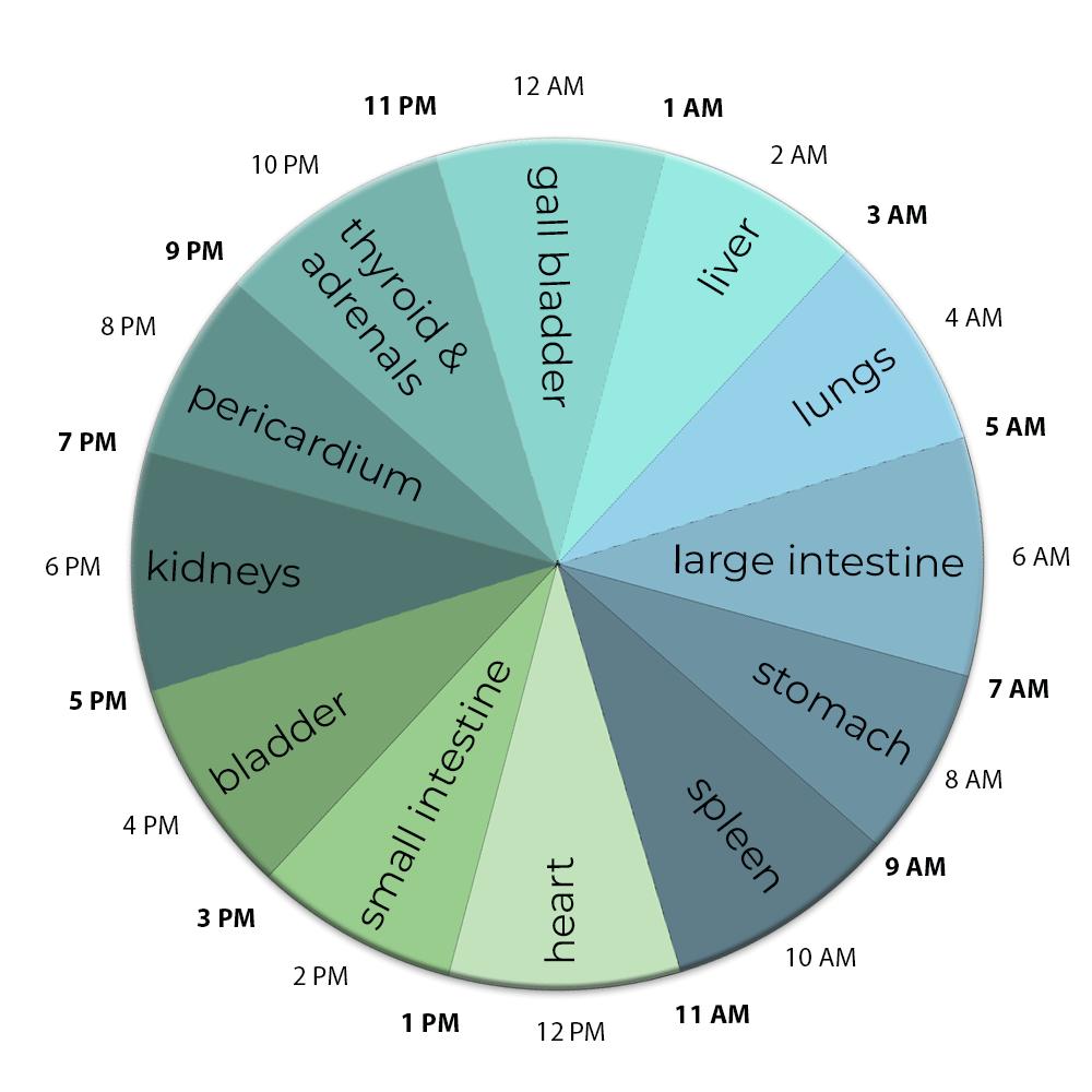 body organ clock diagram