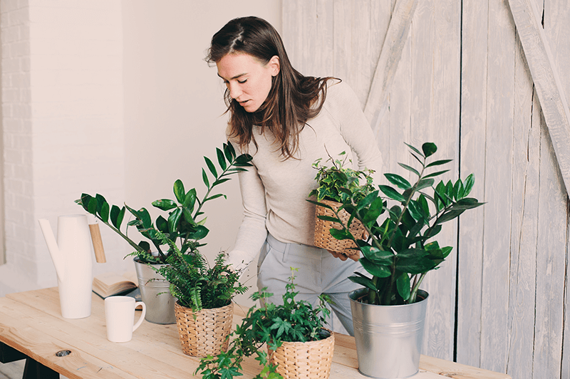 young woman selecting houseplants