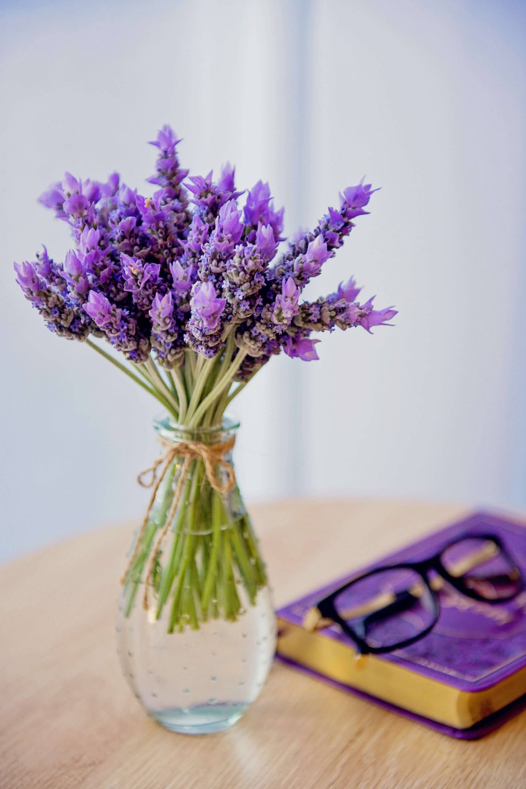 how to use fresh lavender | City Beauty